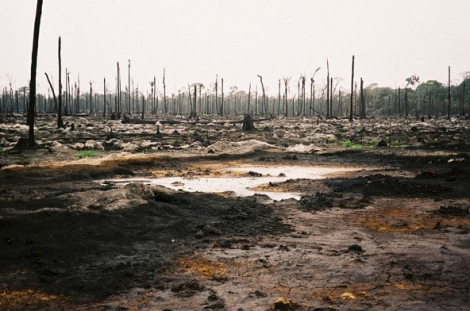 Oil Pollution in the Niger Delta